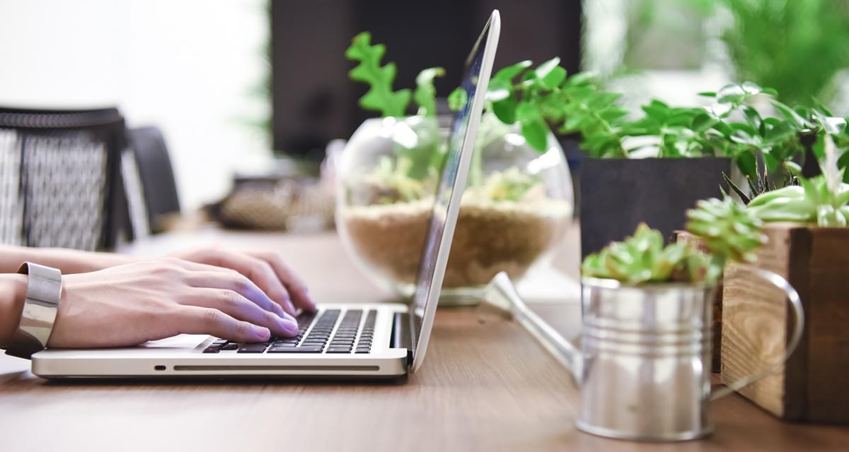 業務効率改善!?快適なデスクワーク環境をつくる「観葉植物」8選。